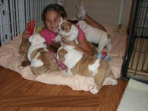 Stunning Teacup Pomeranian Puppies For Sale Pueblo Co